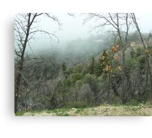 Fog And The Forest Canvas Print