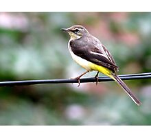 Bird on wire Photographic Print