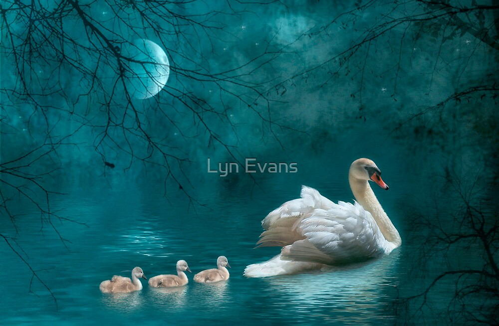Moonlit swim by Lyn Evans