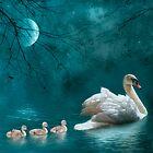 Moonlit swim by Lyn Evans