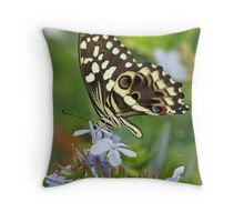Citrus Swallowtail butterfly side-on Throw Pillow