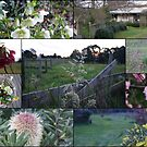 Hint of spring in Gippsland Victoria by BronReid