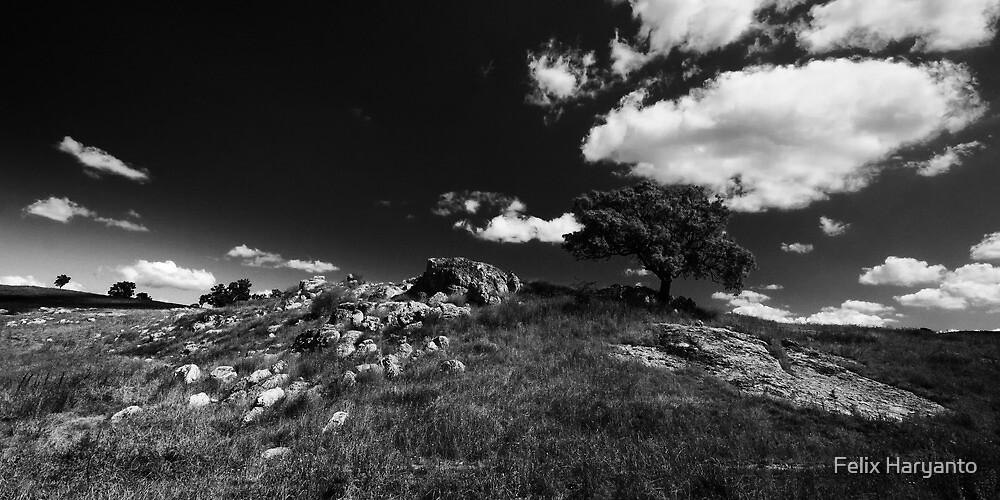 Forgotten Land by Felix Haryanto