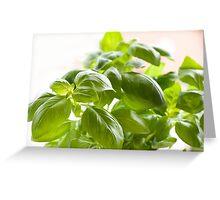 Fresh Ocimum basilicum Greeting Card
