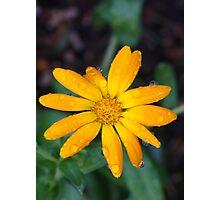 Calendual/Marigold 5 Photographic Print
