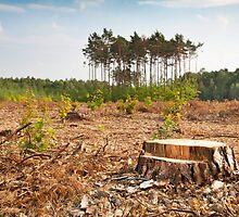 Woods lone trunk in deforestation by Arletta Cwalina