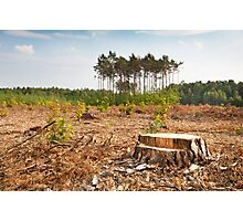 Woods lone trunk in deforestation Photographic Print