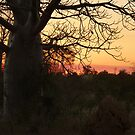 Kimberley Sunset with boab tree, Western Australia by Virginia  McGowan