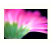 Pink Gerbera III Art Print