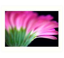 Pink Gerbera II Art Print