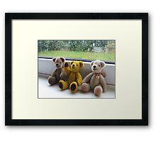 Bears on a Wet Thursday Framed Print