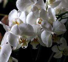 White Softness by sstarlightss