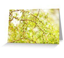 Willow Salix Alba tree detail Greeting Card