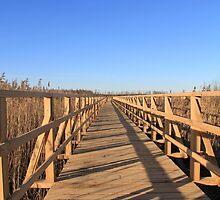 Boardwalk, Federsee by Retancourt