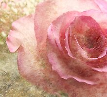 (Textures  calendar) A Rose (for ana belaj) by vigor