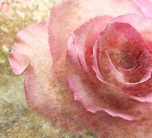 (Textures  calendar) A Rose (for ana belaj) by vigor