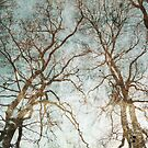 Enchanted Trees by Circe Lucas