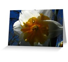 Narcissus in shadow Greeting Card
