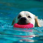 Swimming pup by Crystal Davis Photography