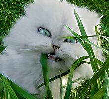 """Princess Kendra Series"" This Grass Tastes Funny by Toni Kane"