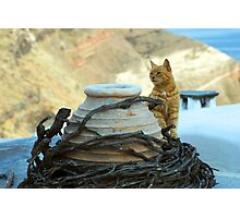 cat on the roof Photographic Print
