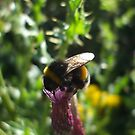 thistle bee by Babz Runcie