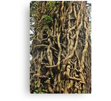 Enchanted Roots of Cong Abbey Ireland Canvas Print