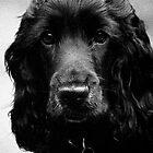 Chloe Puppy (1) by Vein