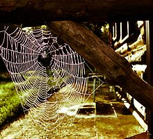 Spider House by Jason Dymock Photography