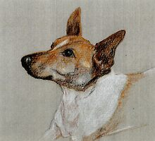 Rocky the rescue dog in crayon by juliecronin