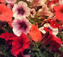 Flowers, flowers, flowers oh my! by kazeproductions