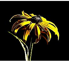 A Daisey a Day Photographic Print