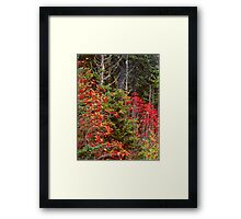 MOUNTAIN ASH,AUTUMN Framed Print