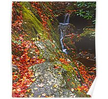 TRIBUTARY LITTLE RIVER,AUTUMN Poster