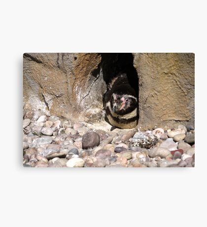 Penguin - Hiding Canvas Print