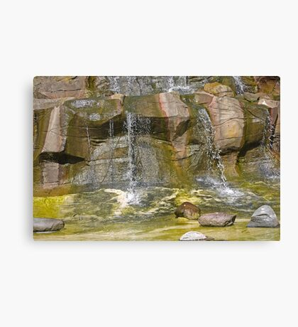 Penguin Falls Canvas Print