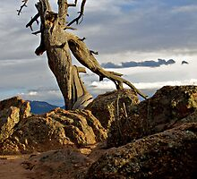 Old Tree on a Mountain by lookagain