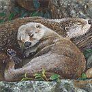Sleeping Otters by artbyakiko