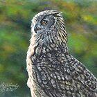 Eurasian Eagle Owl by artbyakiko