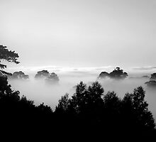 ~ One Morning ~ by LeeoPhotography