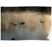 Swans, Lake and Fog Poster