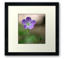 Purple Wildflower 2 Framed Print