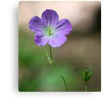 Purple Wildflower 2 Canvas Print