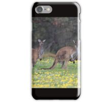 kangaroos on yellow flowers iPhone Case/Skin