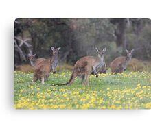 kangaroos on yellow flowers Metal Print