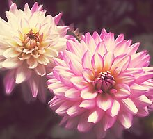 Two lovely large flowers by kazeproductions