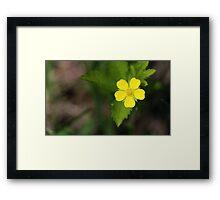 Yellow Wildflower Framed Print