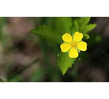 Yellow Wildflower Photographic Print