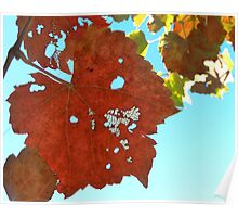 vine leaves Poster