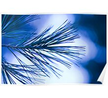 Long Needled Pine at Night Poster